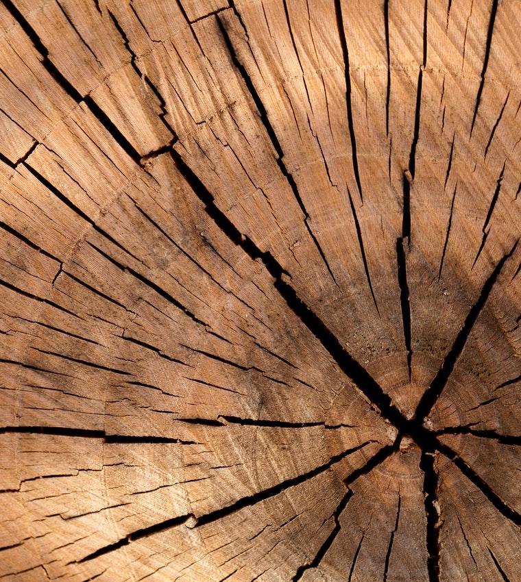 wood feedstock