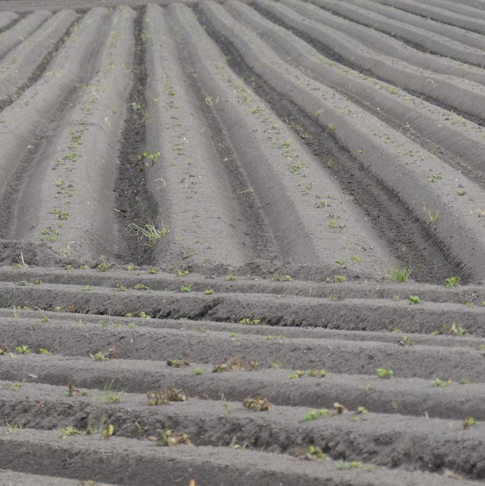 ploughed field soil