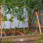 raised bed sides off