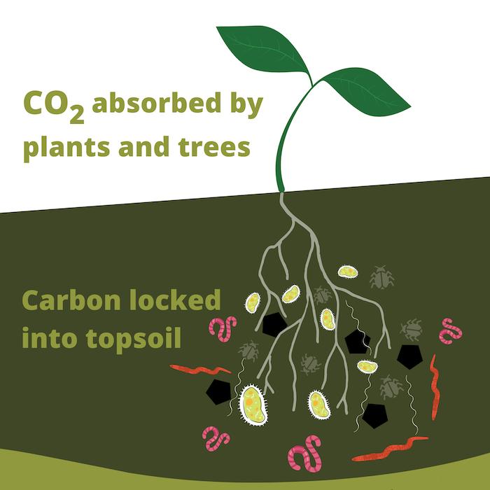 soil carbon sequestration diagram