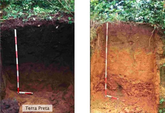 Terra Preta soil from Amazon